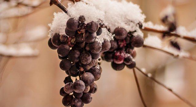 raisin de glace