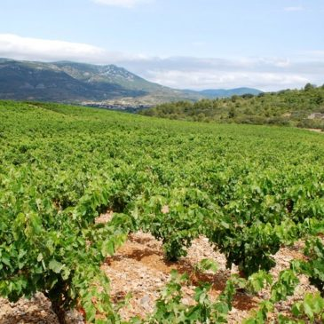 L'appellation Fitou, des rouges du Languedoc qui dépotent !